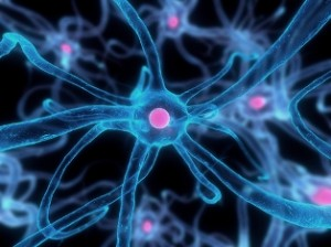 нервные клетки