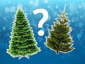 какую елку выбрать