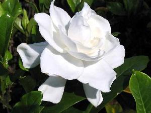 flower50.jpg
