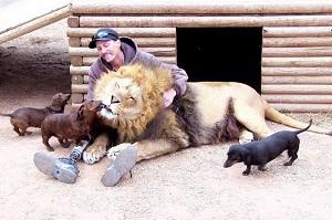 такса и лев